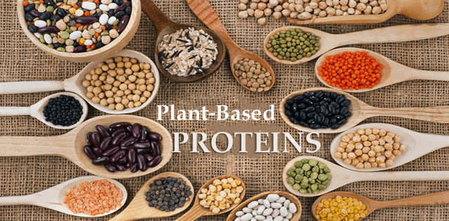 Proteins From Plants