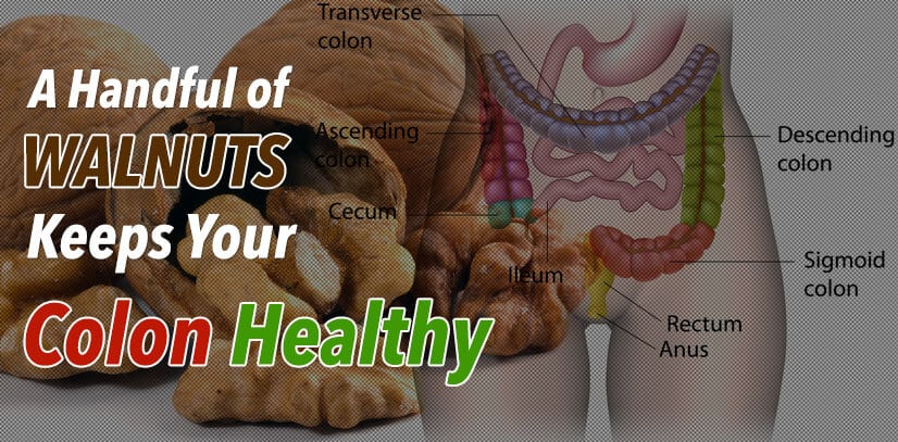 Walnuts on Colon Health
